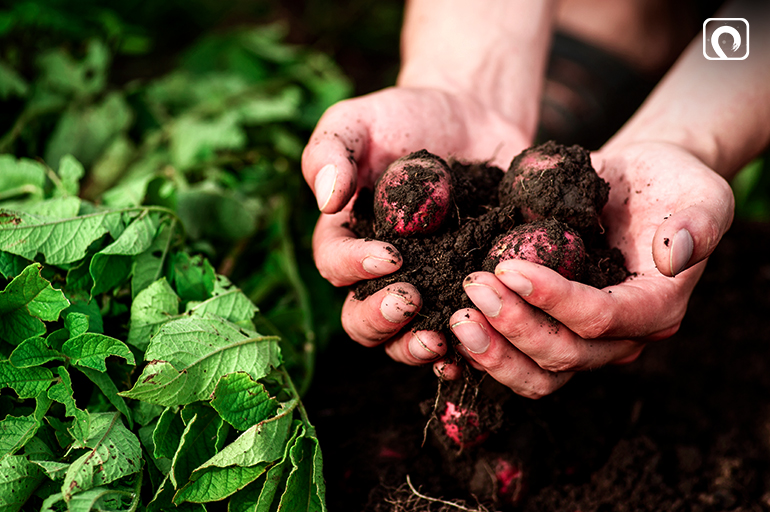 1getting-started-with-organic-gardening