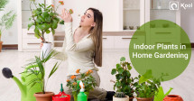 Indoor Plants in Home Gardening- a Lush Guide